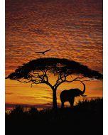 KOMAR - fotótapéta (African Sunset)