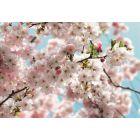 KOMAR - fotótapéta (Spring)