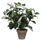 MICA DECORATIONS - selyemvirág (bunkóliliom, zöld, 35cm)