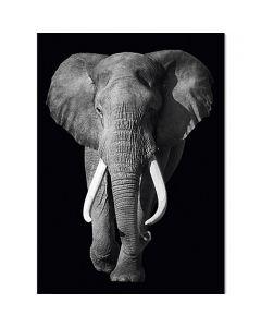 KINGS OF NATURE - dekorpanel (elefánt, 100X140cm)