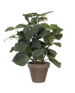 MICA DECORATIONS - selyemvirág (pilea, zöld, 35cm)