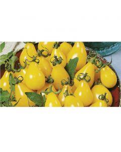 Paradicsom palánta - 12cm cserépben (növény, Solanum lycopersicum pear drops)