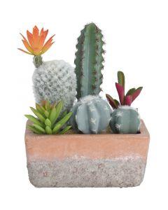 Művirág (kaktusz mix)